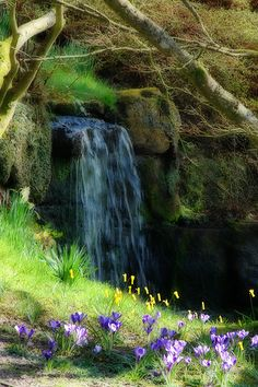 Wakehurst Place, spring falls   Wakehurst Place is a National Trust property located near Ardingly, West Sussex