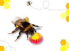 Nectar keyring - a tiny first aid kit to help save exhautes bees.