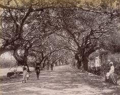 Mowbray Road Madras (aka TTK Road)