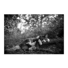 https://flic.kr/p/ycFRda | Chee September 2015  #cat #smallcats #blackandwhitephotography