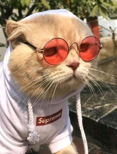 Cat dressed like an emperor minds a seafood stall in Vietnam cute food diy garten witzig Funny Cute Cats, Cool Cats, Cute Dogs, Beautiful Cats, Animals Beautiful, Kittens Cutest, Cats And Kittens, Siamese Cats, Cute Baby Animals