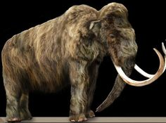 Scientists Want to Bring Some Animals Back from Extinction.  De-extinction for woolly mammoths, mastodons, and sabre-toothed tigers?