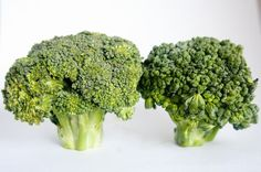 The health benefits of broccoli... There;s a very, very good reason our mothers made us eat broccoli, even more than they ever knew themselves.