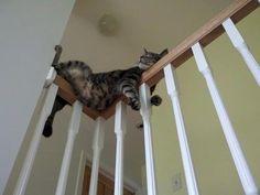 どこでも眠る猫04