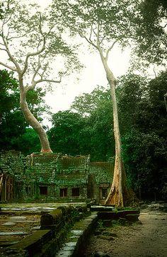 Ta Prohm, Angkor -   Ta Prohm, Angkor (August 2003)    www.vicentemendez.com