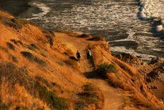 Surf's Up.   Palos Verdes, California
