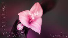"""""""Outubro Rosa2014"""" Flor de Mato """"Outubro Rosa é uma campanha de conscientização realizada por diversos entes no mês de outubro dirigida a sociedade e as mulheres sobre a importância da prevenção e do diagnóstico precoce do câncer de mama."""""""
