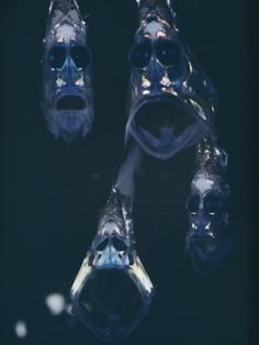 """I'll be seeing these in my nightmares forever. """"Hatchetfish found in the Mariana Trench. This would be terrifying to encounter."""" - faces in the ocean darkness (I pray not in your room at night) ~;^o>"""