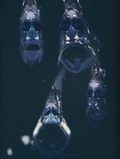 Strange deep-sea fish - mysterious messenger in the dark world Deep Sea Creatures, Weird Creatures, Underwater Creatures, Underwater Life, Fauna Marina, Deep Sea Fishing, Sea Monsters, Sea And Ocean, Exotic Fish