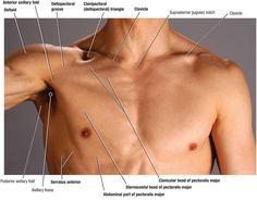 117 best neck images on pinterest anatomy reference medical anatomy of collar bone duke anatomy lab 2 pre lab exercise ccuart Images