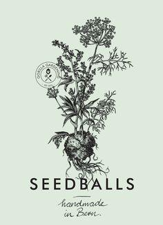 Our herb seedball  #seedballs #seedbombs #urbangardening #gardening #illustration #graphicdesign