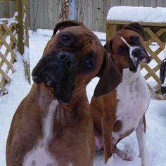 Love Boxers                                                                                                                                                                                 Más
