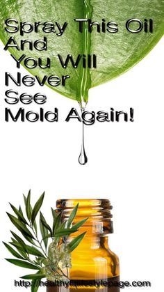 A lot of people are struggling with mold in their homes, and if you are one of them, you are surely familiar with its negative consequences on your health. Luckily, we present you a simple and effe…