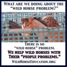 """""""Mention my name and you will definitely cause a riot,"""" Leigh """"I know, that is why I am going to mention your name."""" Reporter in 2016 At Wild Horse Education (WHE) we…"""