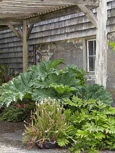 Landscaping Tips from Sean Conway - Garden Design Ideas - Country Living.  Love the Gunnera