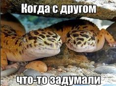 забавные животные))   #юмор