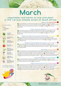 Growing your own organic delicious food is most rewarding! These educational Moonbloom posters will help guide you. South Africa Honeymoon, Vegetable Garden, Delicious Food, Herbs, Posters, Organic, Vegetables, Plants, Vegetables Garden