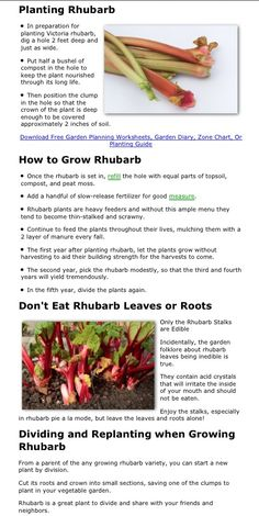 Love rhubarb! I grew up with it growing in our (and every neighbor's) yard in Minnesota.  Have a much harder time finding it in Texas now! I want to be in the situation of having TOO Much of the stuff!