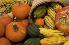 Pumpkins (and all orange-flesh squashes) | Meal and a Spiel