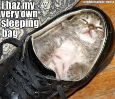 Cat has a sleeping bag!