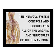 """""""The nervous system controls and coordinates all of the organs and structures of the human body."""" Chiropractic quote."""