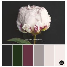 a peony-inspired color palette ❤ liked on Polyvore featuring home, home decor, inspirational home decor, dog home decor, matte screen and phone screen