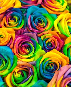 Flowers Roses Exquisite Light Pink Rose Flower Green and Purple Background 3dRose Alexis Photography T-Shirts