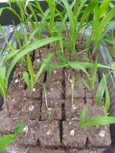 Zero Waste Household Guide: Garden Tips