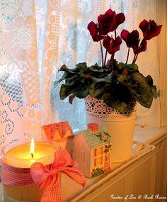 Be My Valentine! (Win an Amaryllis!)   http://ourfairfieldhomeandgarden.com/be-my-valentine-win-an-amaryllis/