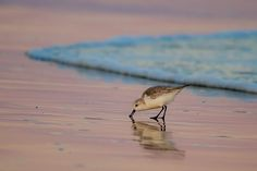 Foraging on the sand by G Seloff