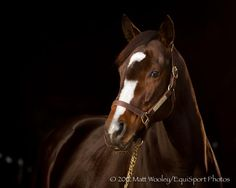 the fabulous thoroughbred, Rachel Alexandra.  2009 Horse of the Year.  She was the first filly in 85 years to win the Preakness, and the first filly to ever win the Woodward Stakes.