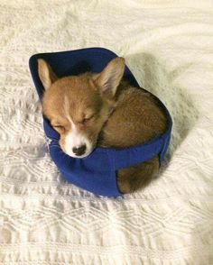 11/29 the cutest little thing! #dogsfunnycutest