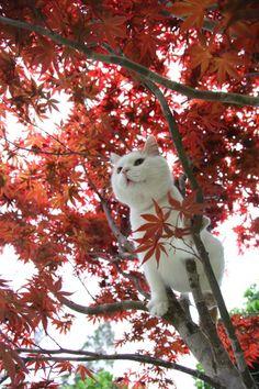 もみじ  source : http://kagonekoshiro.blog86.fc2.com/blog-entry-6441.html