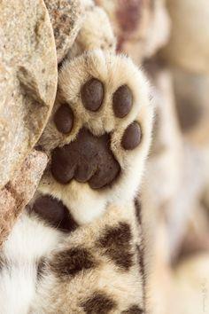 Chocolate toe beans