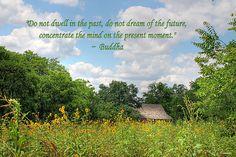 Buddha quote above Sunflower field