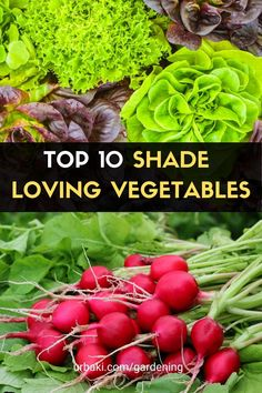 The Top 10 shade loving vegetables to plant in your home garden These vegetables love growing in shade. We explain to you how to grow these shade-loving plants, all vegetables in your home garden. A lot of gardeners do not get sunlight in their garden so our hope is to encourage all such gardeners on how to grow these shade-loving vegetables in their garden, to add more harvests to their gardening journey. #urbakigardening #gardening #vegetables #homegarden #vegetableshade…