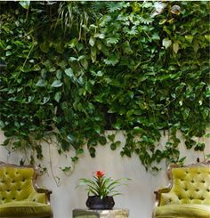 Patio Mexicanos Ideas concrete patio with fire pit.Flagstone Patio Over Concrete. Living Wall Planter, Wall Planters, Vertical Green Wall, Building A Patio, Plant Projects, Patio Shade, Patio Flooring, Concrete Patio, Flagstone Patio