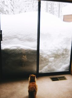Don't know what the cat is thinking, but this is my kind of snow fall!!