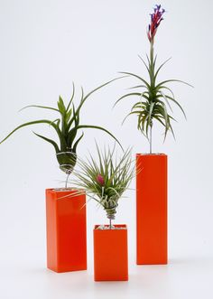 Airplantman Designs brings you the 'AirplantVessel' tabletop accent. AirplantVessel gracefully suspend sculptural airplants above hand crafted vessels. These floating displays celebrate the unique eth My Flower, Flower Vases, Flower Pots, Air Plants Care, Plant Care, Unique Plants, Exotic Plants, Hanging Plants, Indoor Plants