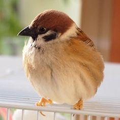 鳥フォトコンテスト「あらし」さん