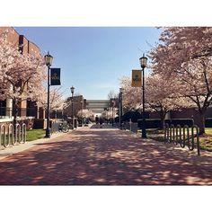University Of Richmond VA Single Gay Men