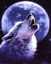 Lobo uiva em noite de lua cheia #lobos lobos lua cheia lobos noite lobos uivando