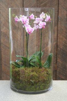 Moth-orchid [Phalaenopsis] grown in a display vase Moth Orchid, Phalaenopsis Orchid, Orchid Plants, Orchid Care, Orchid Terrarium, Garden Terrarium, Succulent Terrarium, Terrarium Ideas, Ikebana