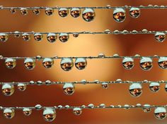Lines of Dew ~ ~ ~ Source: Веселые нотки - qwert9 - LensArt.ru