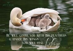 """""""He will cover you with His feathers and under His wings you will find refuge; His faithfulness will be your shield and rampart."""" Psalm 91:4"""