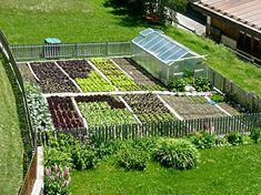 Consociazione tra piante da orto: ecco quali piante possiamo coltivare, insieme, nell'orto. Ortaggi, piante da frutto e verdure da abbinare insieme.