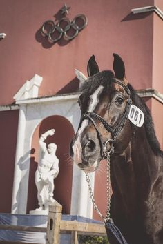 #TopShot of the day? We love this portrait of the effortlessly gorgeous Casall ASK... #LGCTRome