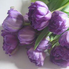 #meiko_flora #ptk_flowers #phx_flowers #quintaflower #inspiring_shot #ind_flowers #ponyfony_flowers #allthingsofbeauty_ #tv_flowers #top_favourite_flowers #pocket_flowers #raw_collage #fabulous_shots #captures_flowers #9vaga_flowersart9 #9vaga_fl_purple9 #total_mypurple #arte_of_nature #detalhes_em_foco #simpley_perfection #mcl_amore #magical_beauties #raw_flowers #wp_flower #rainbow_petals #world_bestangels #world_bestflower