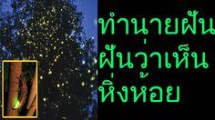 ฝันเห็น หิ่งห้อย และ แสงหิ่งห้อยสวยงาม