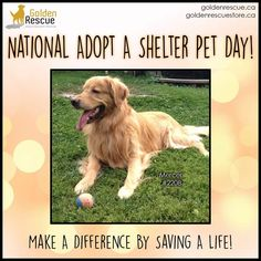 Today Is National, Pet Day, Fur Babies, Adoption, Finding Yourself, Animal Shelters, How Are You Feeling, Pets, Animals